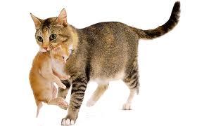 maman et son chaton