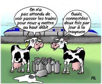 vache_fil